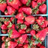Stony Point Strawberries