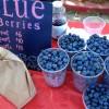 Plump & Sweet Blueberries