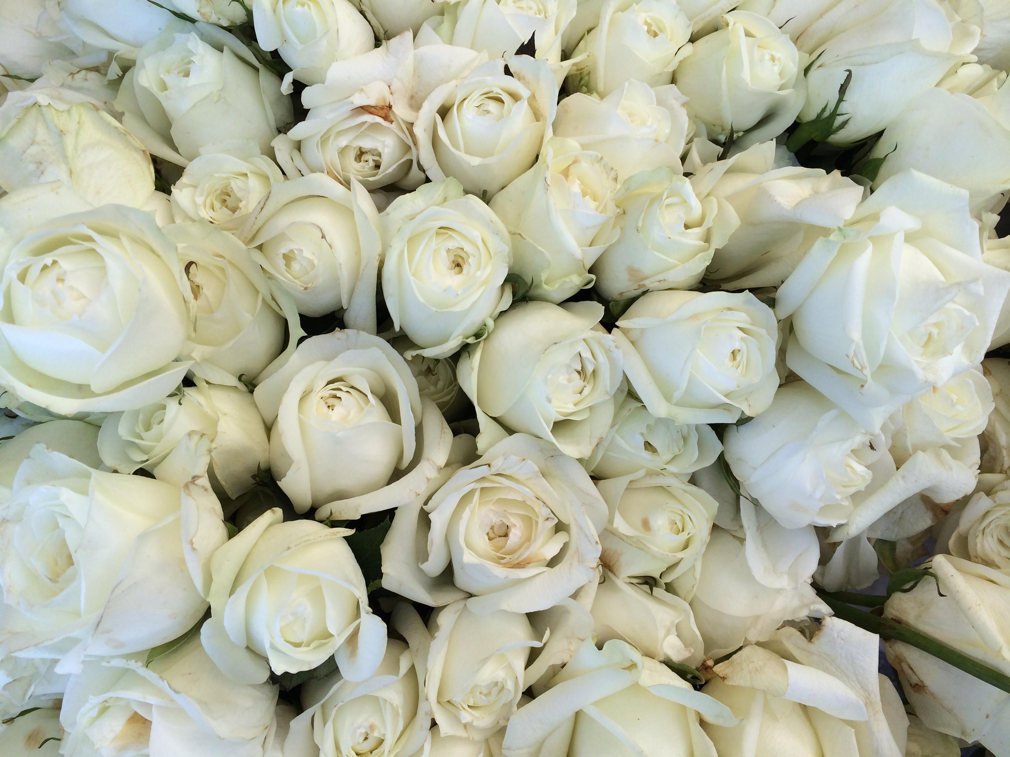 White roses at Santa Monica farmer's market
