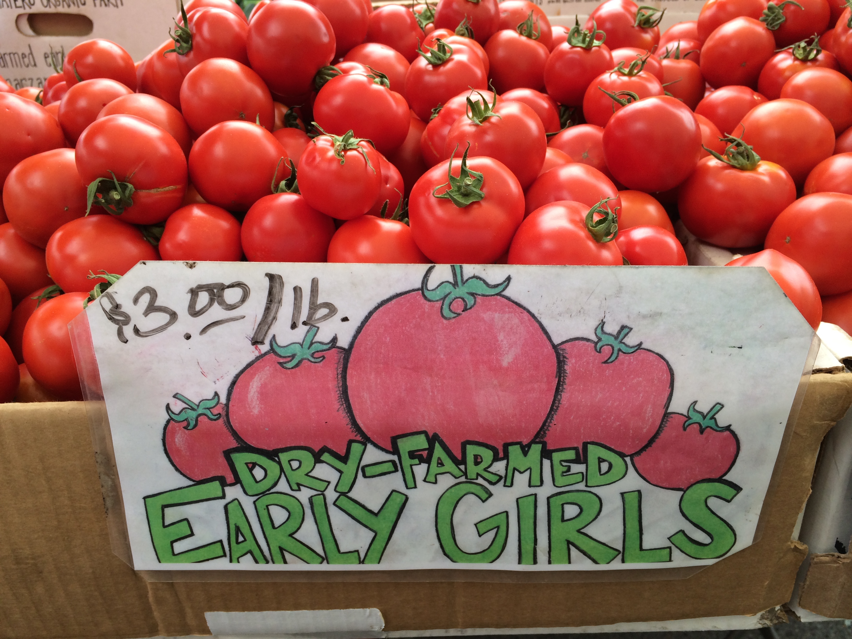 Early Girl Tomato Time