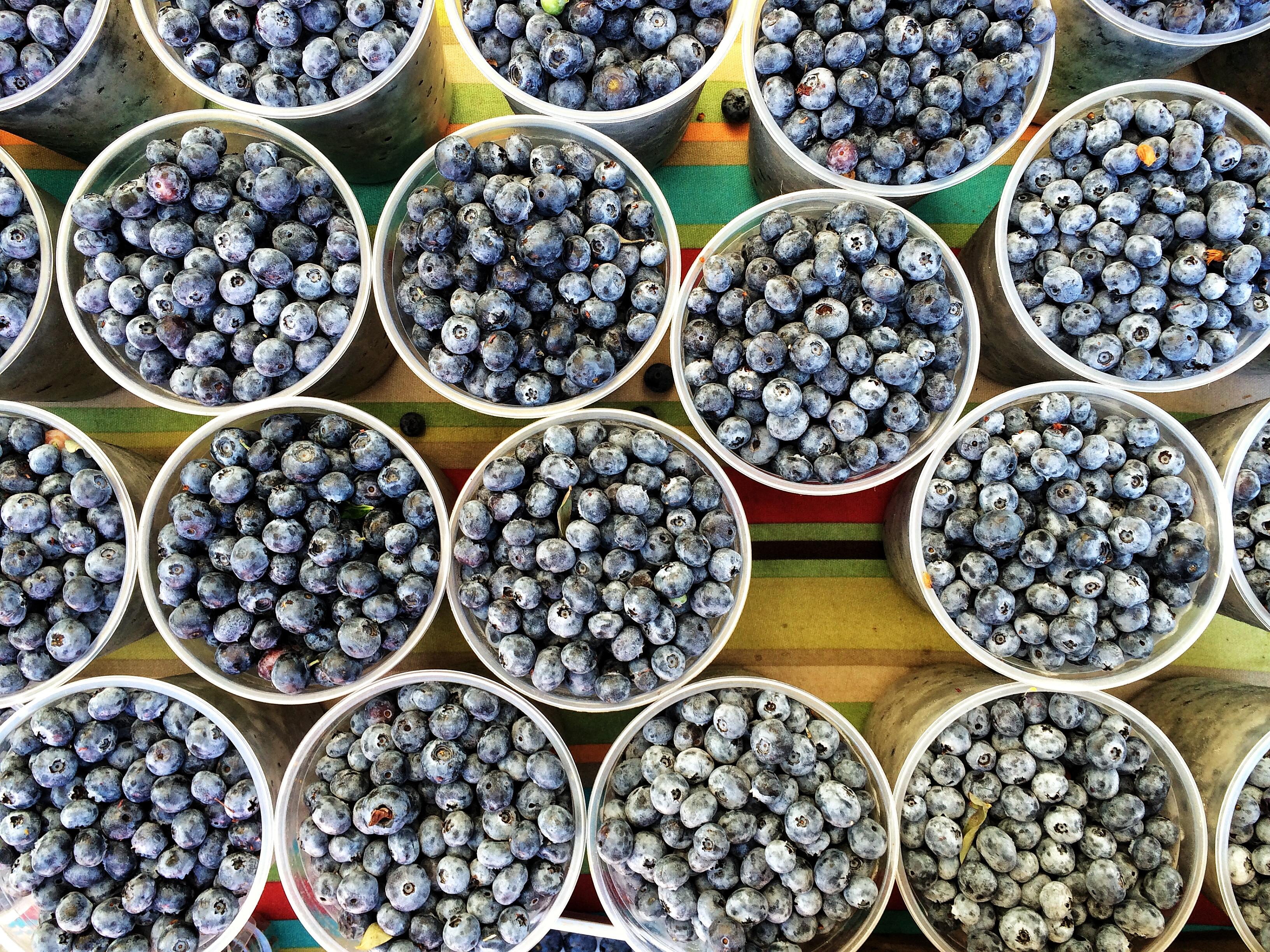 Organic blueberries in July