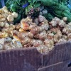 Sunchokes from Orchard farms