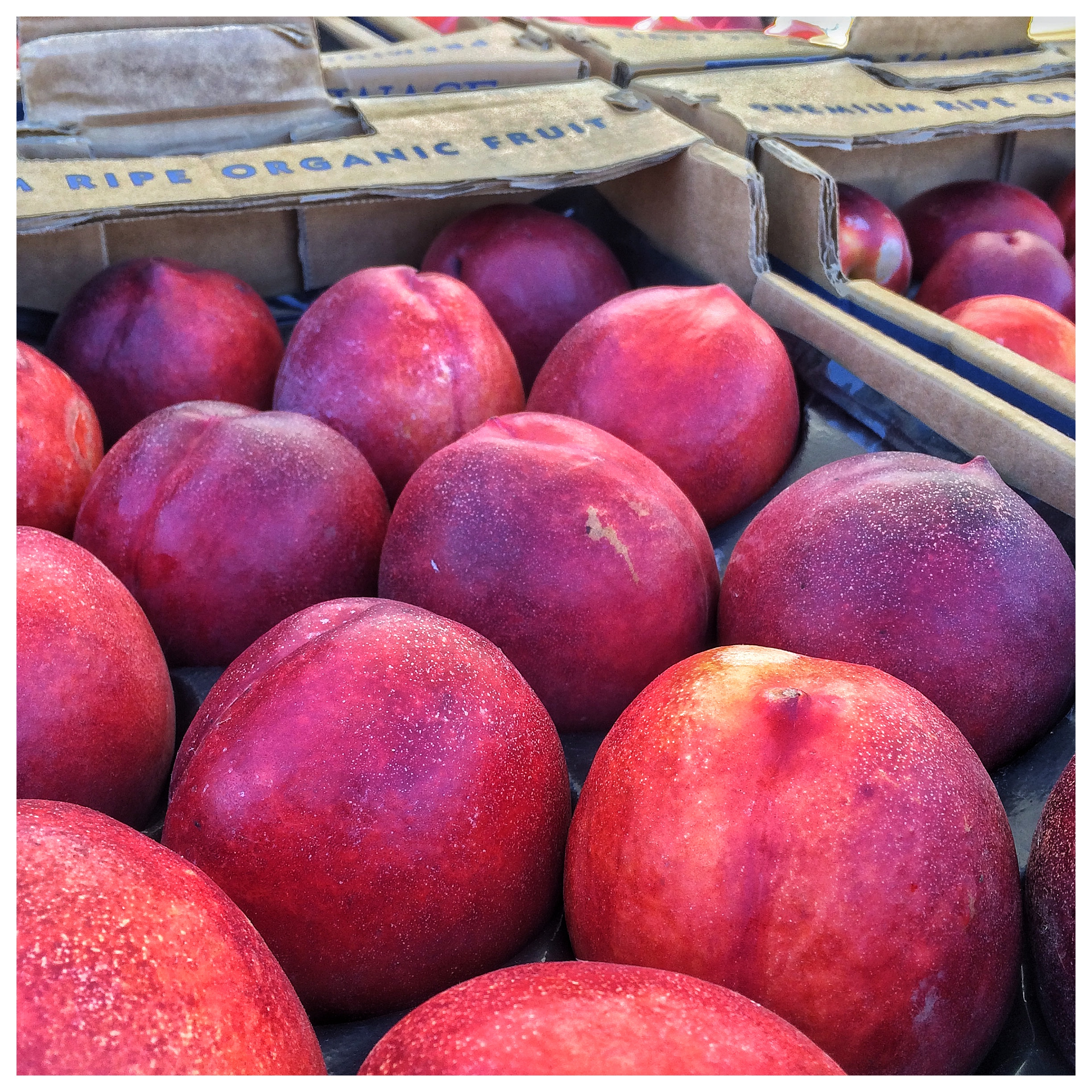 Nectarines from Kashiwase Farms