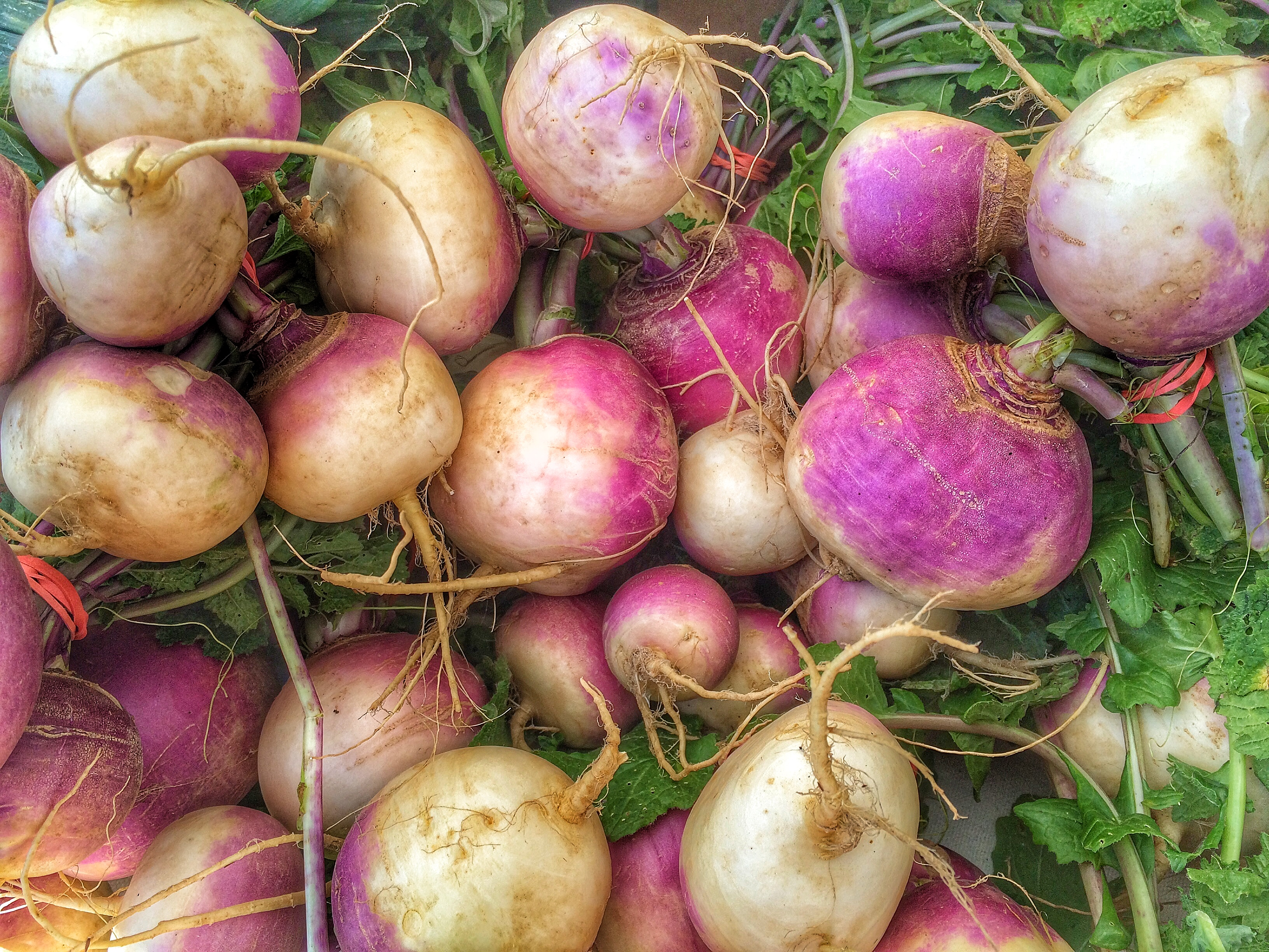 Turnips at the Fiddler's Green Stand
