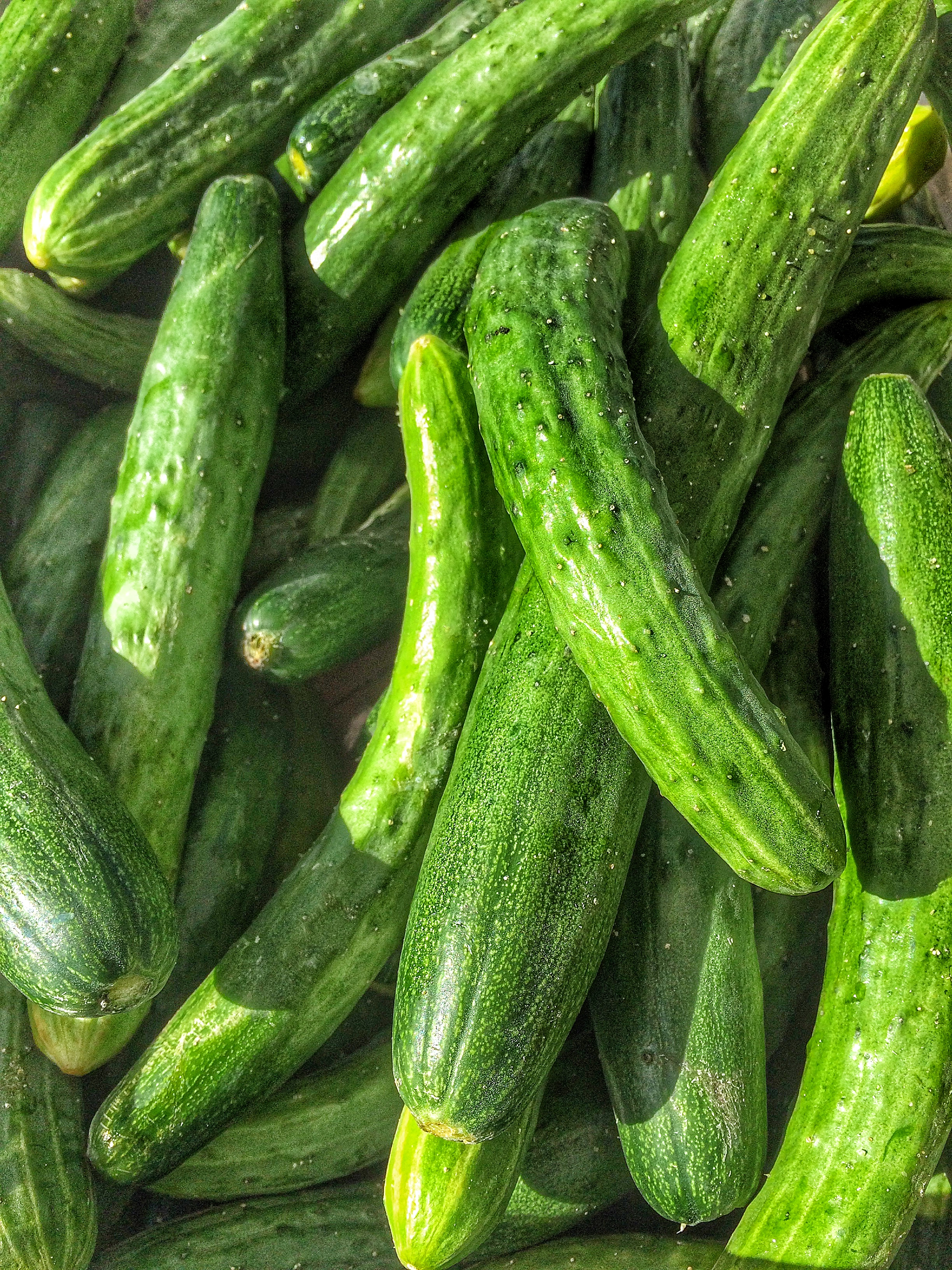 Japanese Cucumbers from Madison Growers in Yolo County