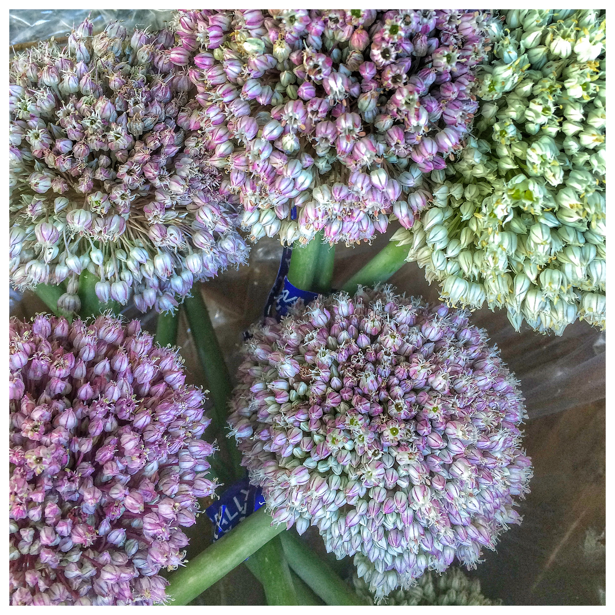 Leek Blossoms from Star Route Farms in Bolinas