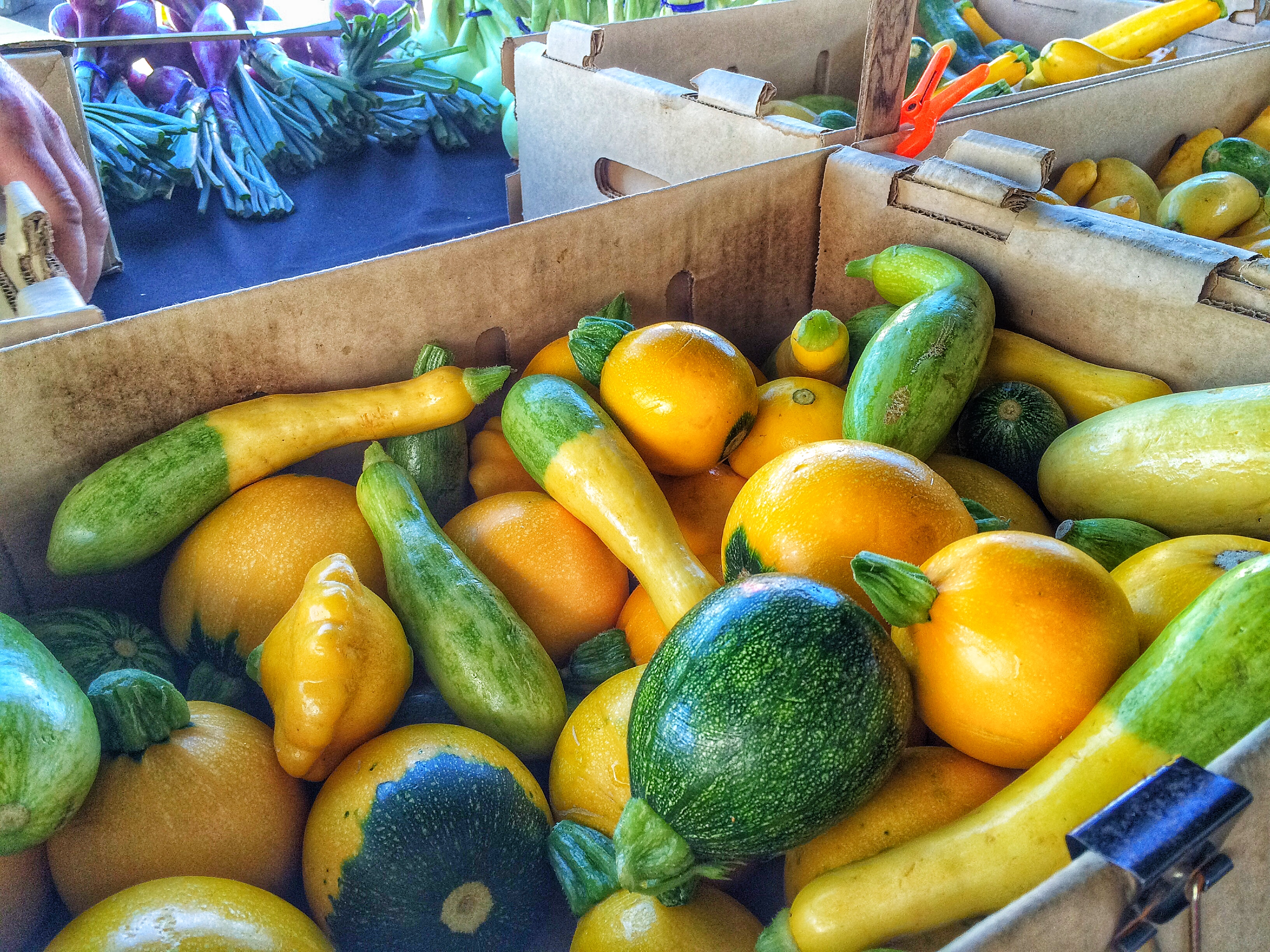 Heirloom Varieties of Summer Squash from Toscano & Sons