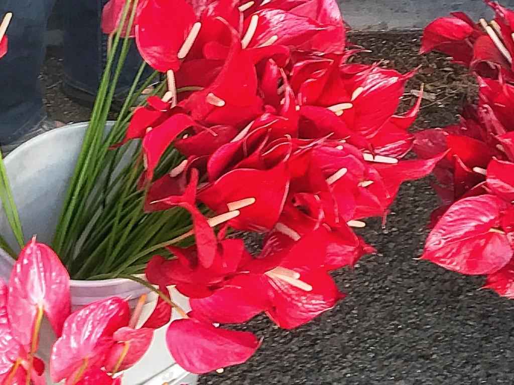 KCC Farmers Market, Honolulu, HI; Snapshot of What's Happening