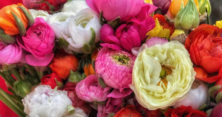 April Flowers (are at the market and calling your name)…