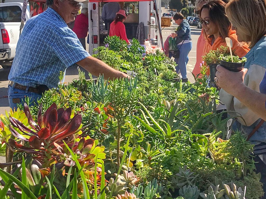 Morro Bay Farmers Market, Morro Bay, Ca: Snapshot of What's Happening