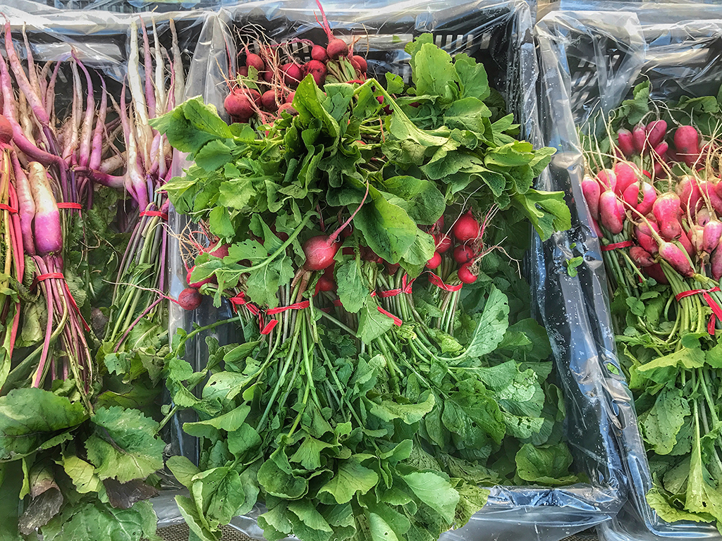 Marin Farmers Market in September – Snapshots of What's Happening